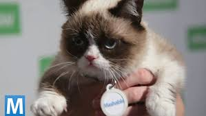 Photo of Grumpy Cat courtesy of Mashable